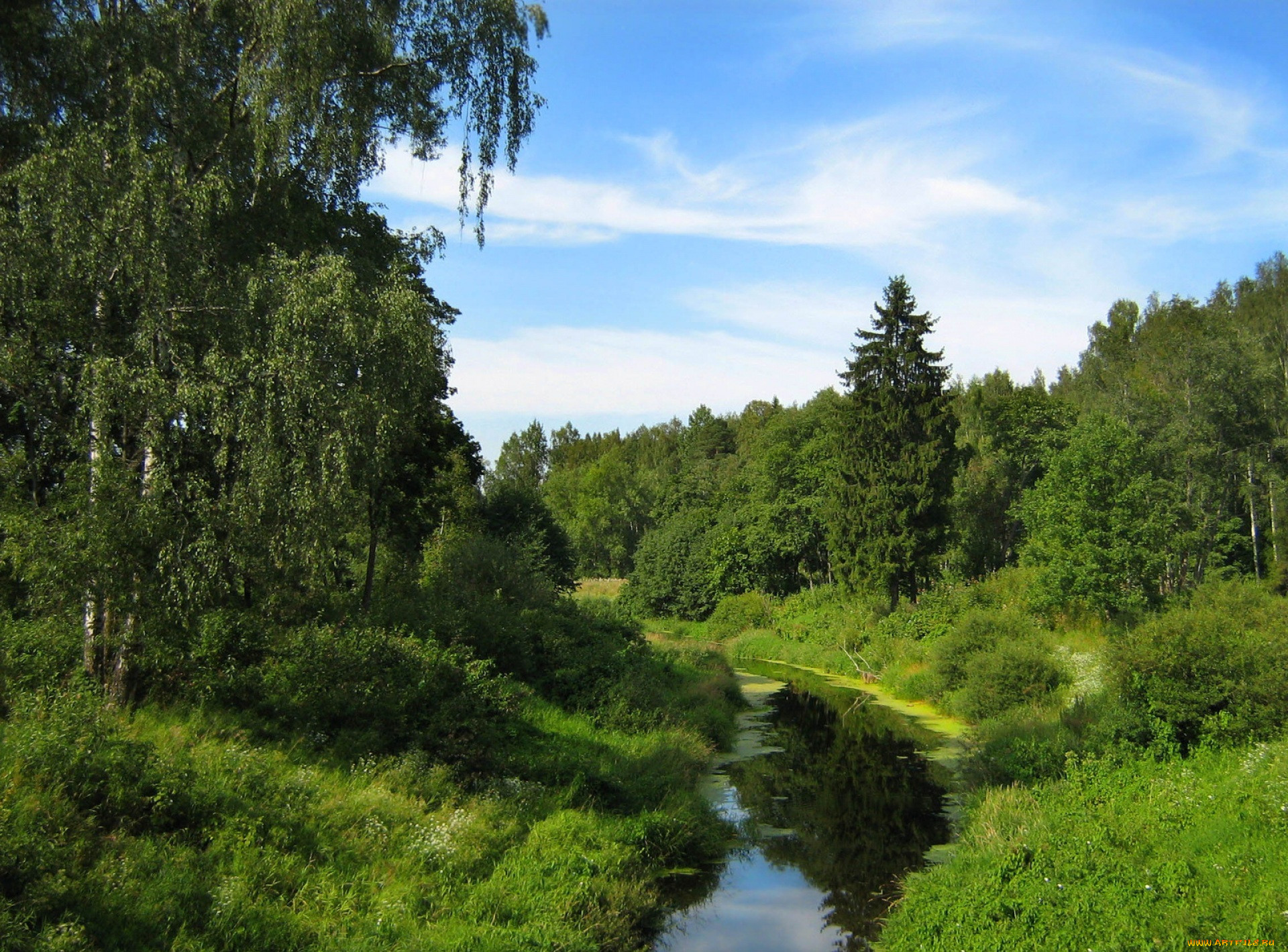 Рассказ летом на речке 18 фотография